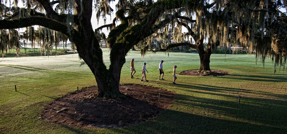 BW-Golf-Tree